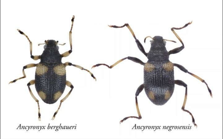 Two-New-Species-Of-Water-Beetles-From-North-Negros-Natural-Park-Described-By-USLS-Biology-Alumnus.jpg